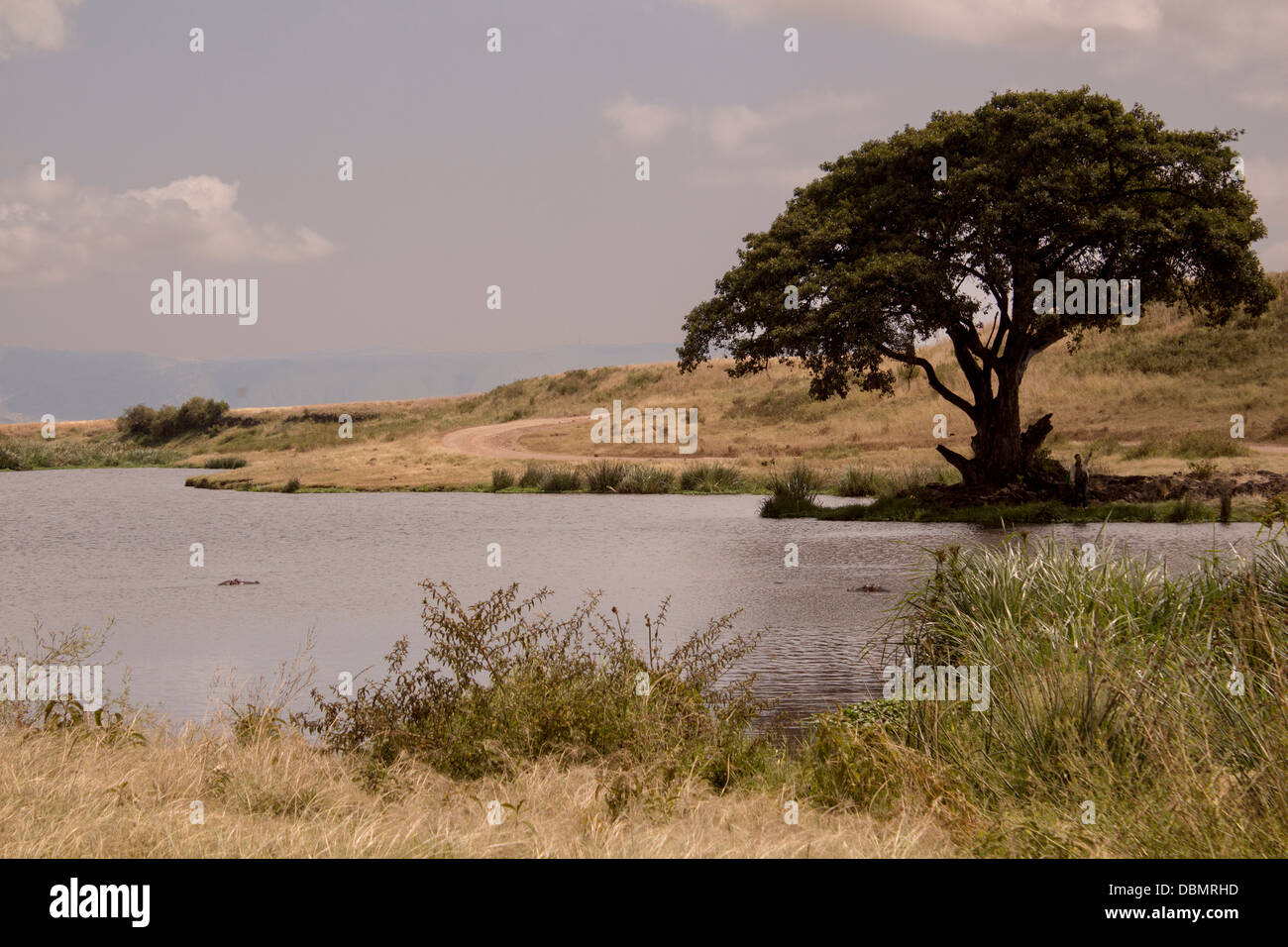 view-of-a-hippo-pond-in-the-ngorongoro-c