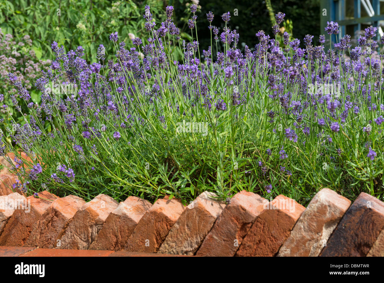 Brick path edging in a sawtooth design bordering a for Path and border edging