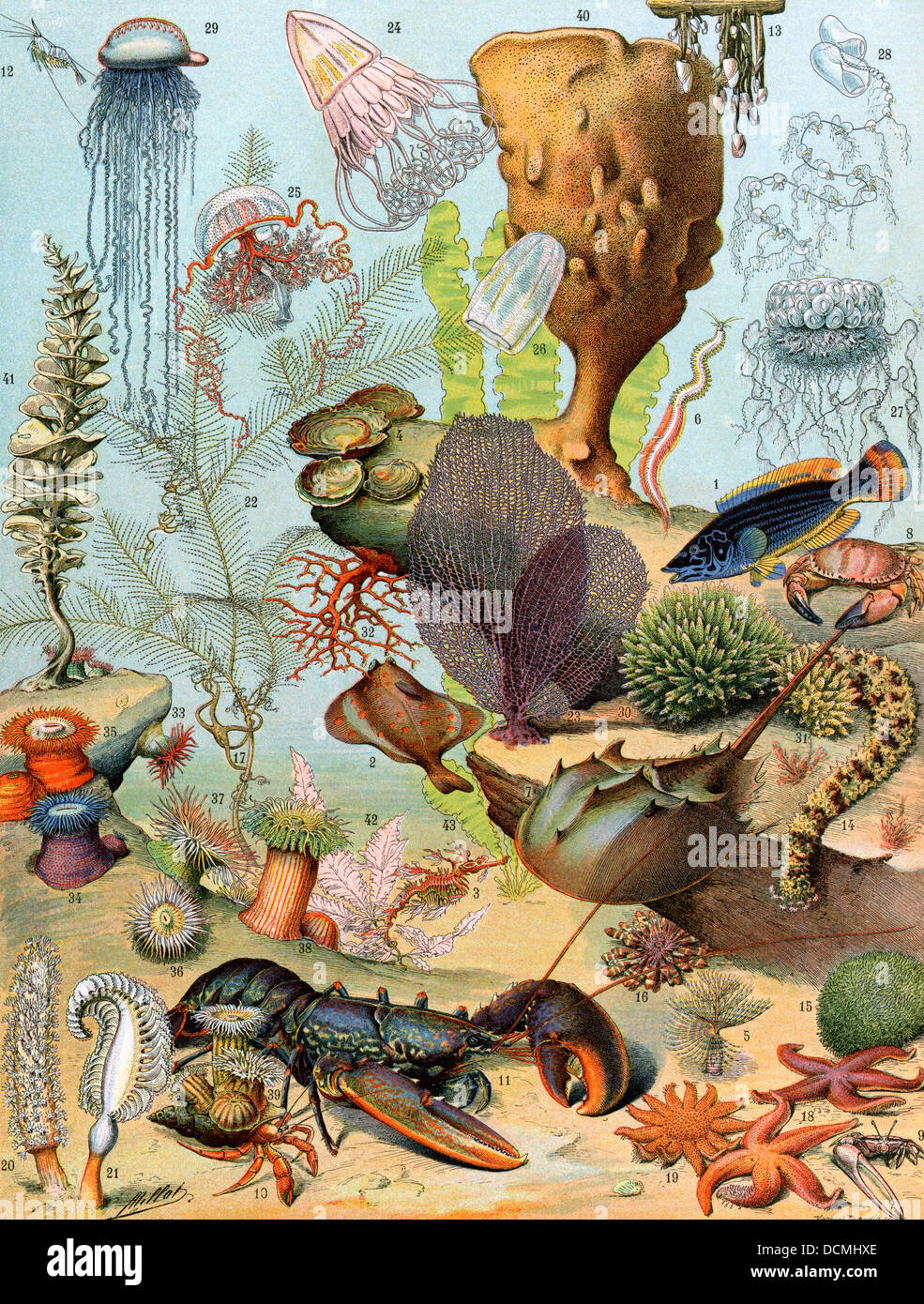 Life on the sea floor, including crustaceans and molluscs. Stock Foto