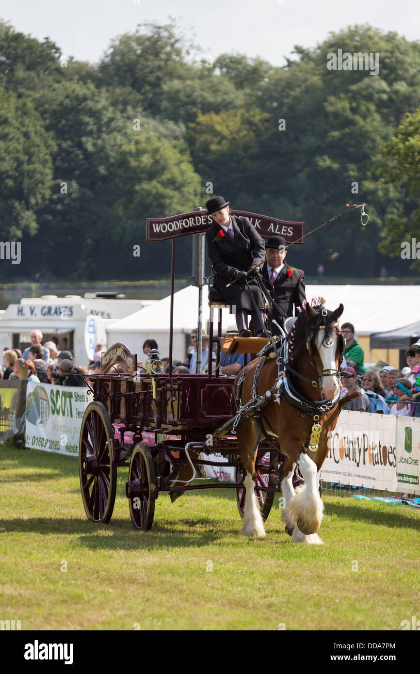 A traditional ale cart and shire horse performing at a county show in England Stock Photo