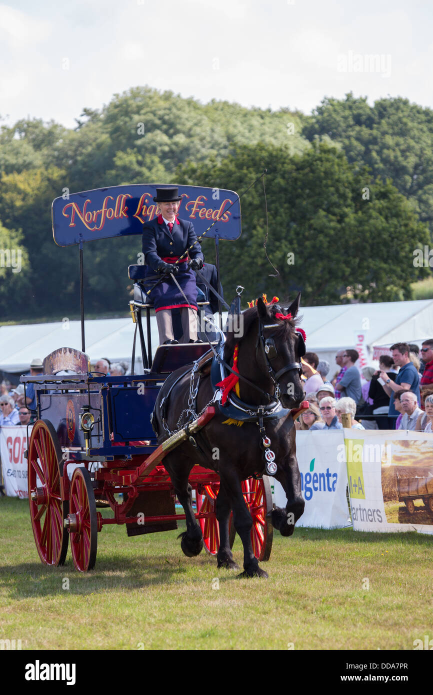 A traditional supply cart and shire horse performing at a county show in England Stock Photo
