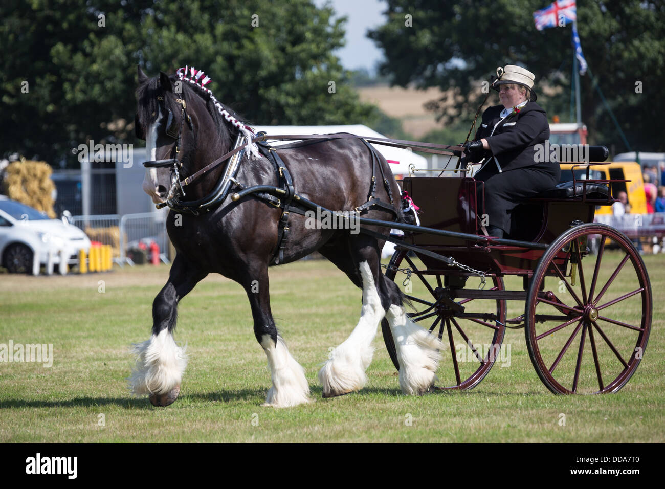 A traditional buggy and shire horse performing at a county show in England Stock Photo