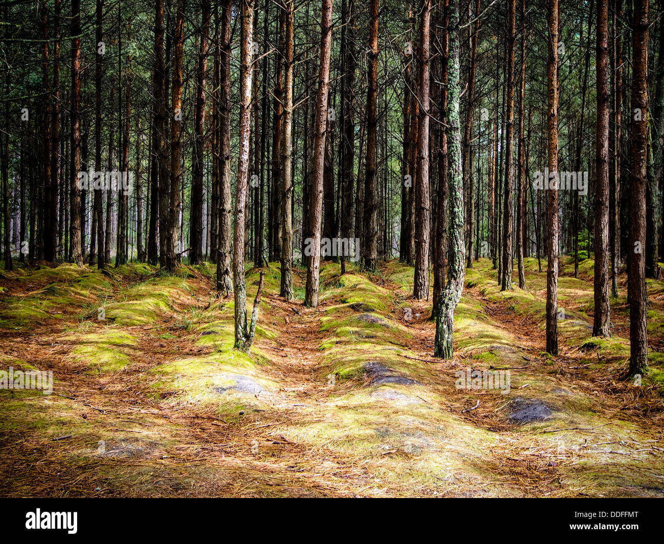 a-dense-forest-with-raised-ridges-on-the