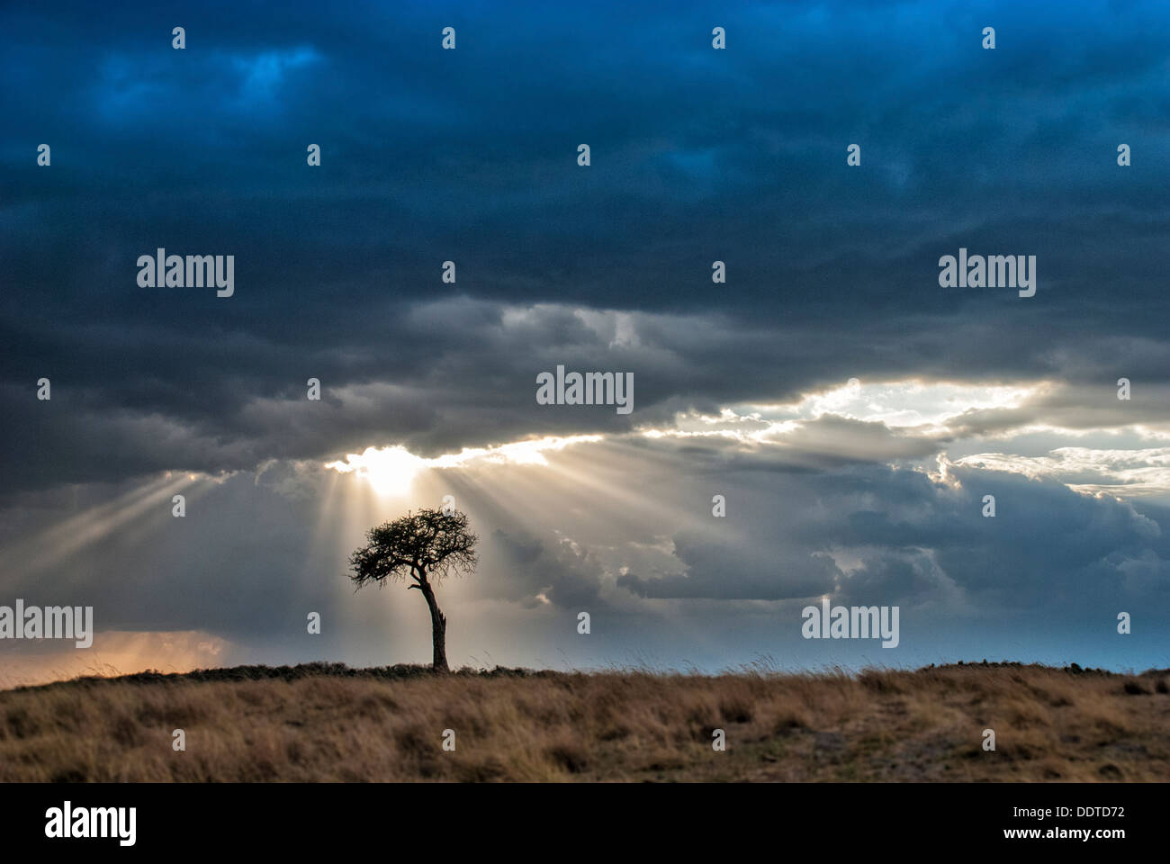 lone-acacia-tree-storm-and-sunbeams-masa