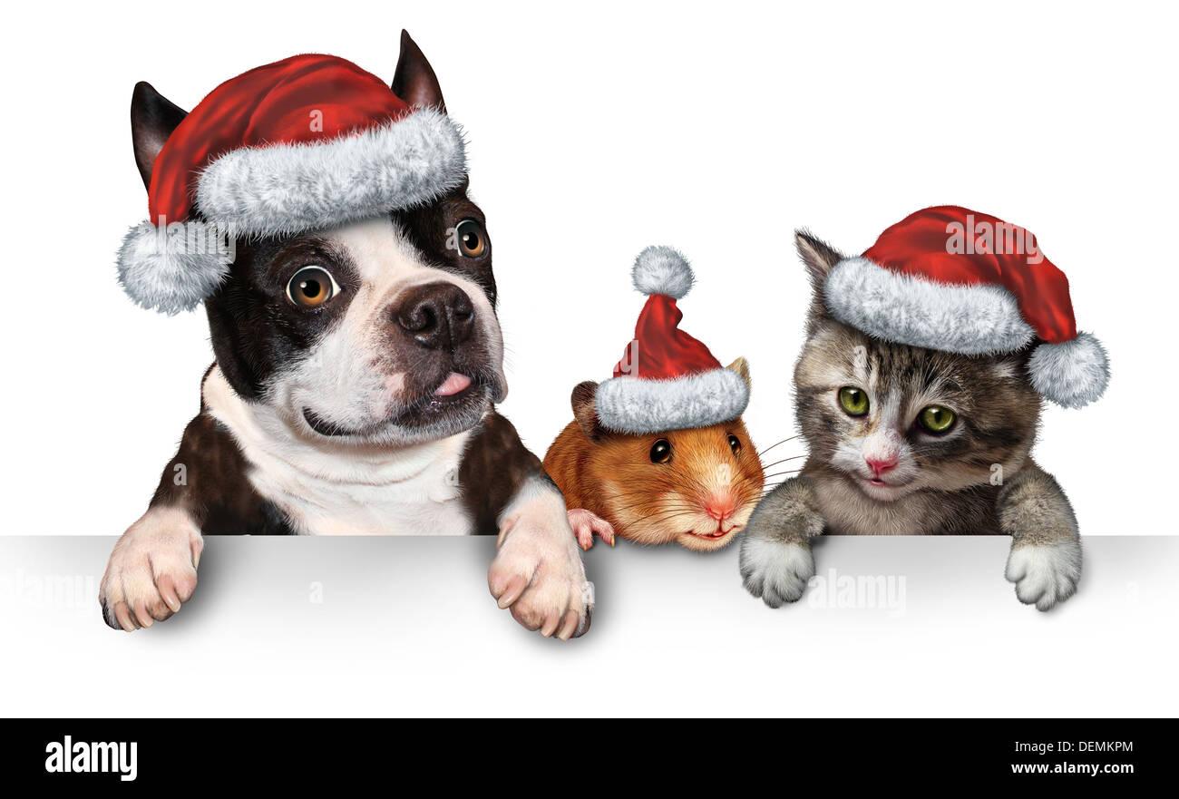 Dog Adoption Medicine Hat