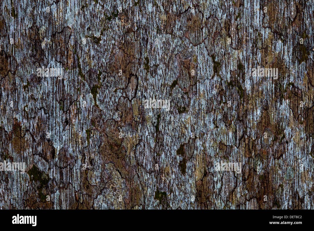 wood texture color shape volume line contrast background