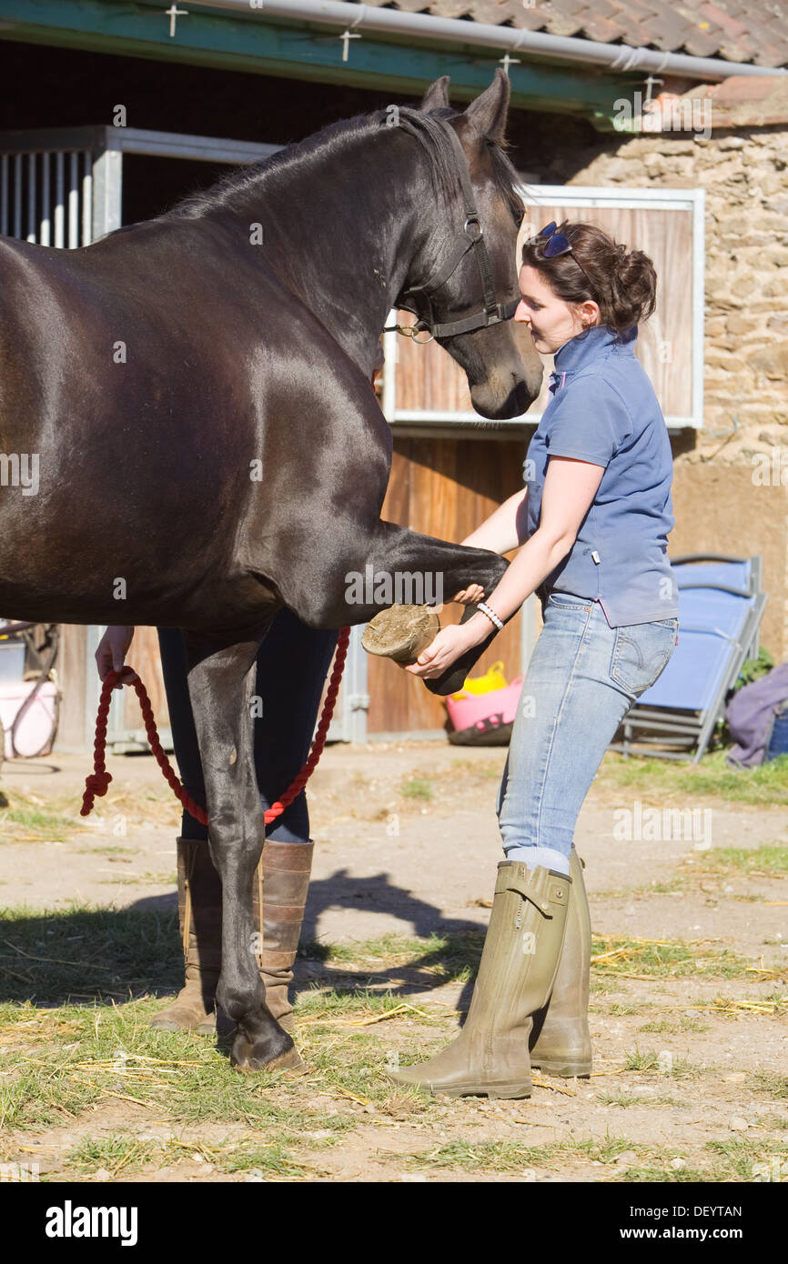 how to become a horse therapist