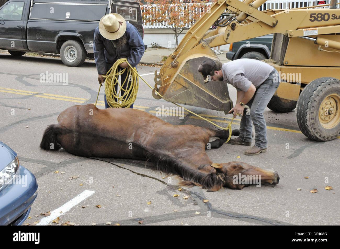 Horse Car Crash