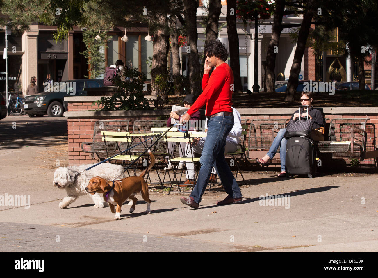 man-walking-3-dogs-while-talking-on-cell