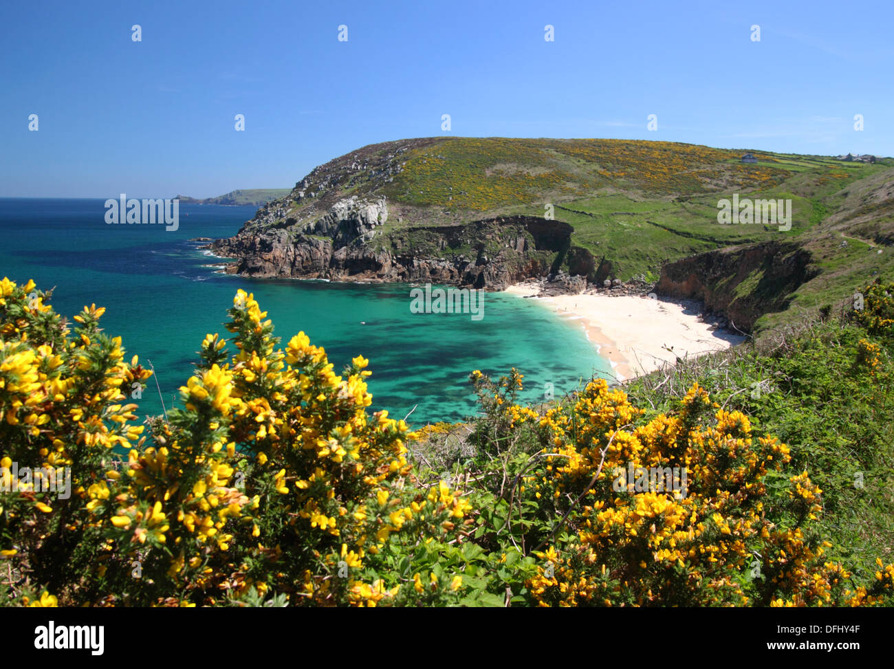 A cove with white sand, turquoise blue sea and yellow gorse flowers in the foreground. Stock Photo