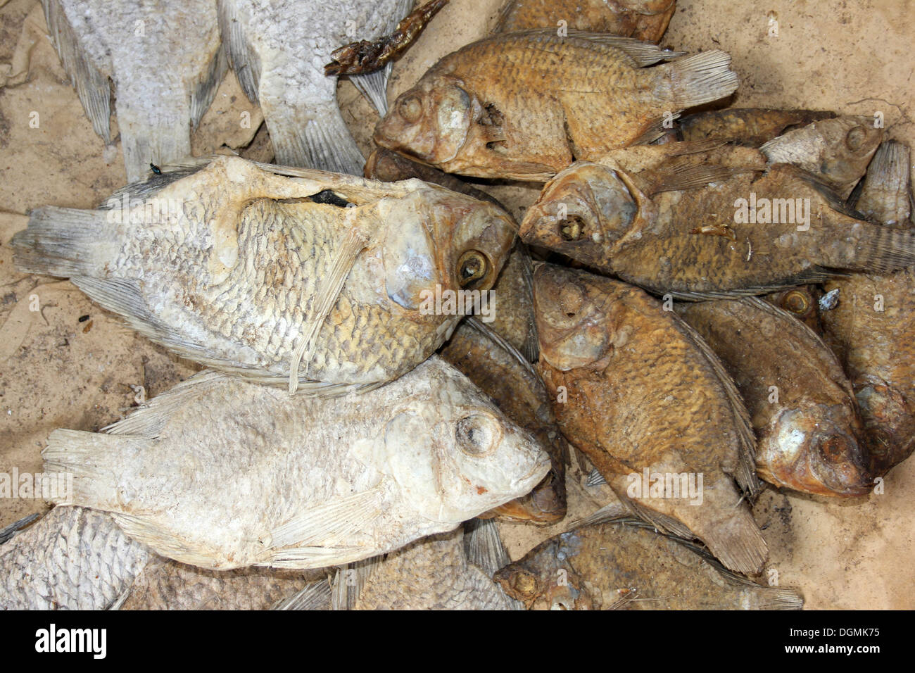 Koobi dried salted tilapia fish stock photo royalty for Dried salted fish