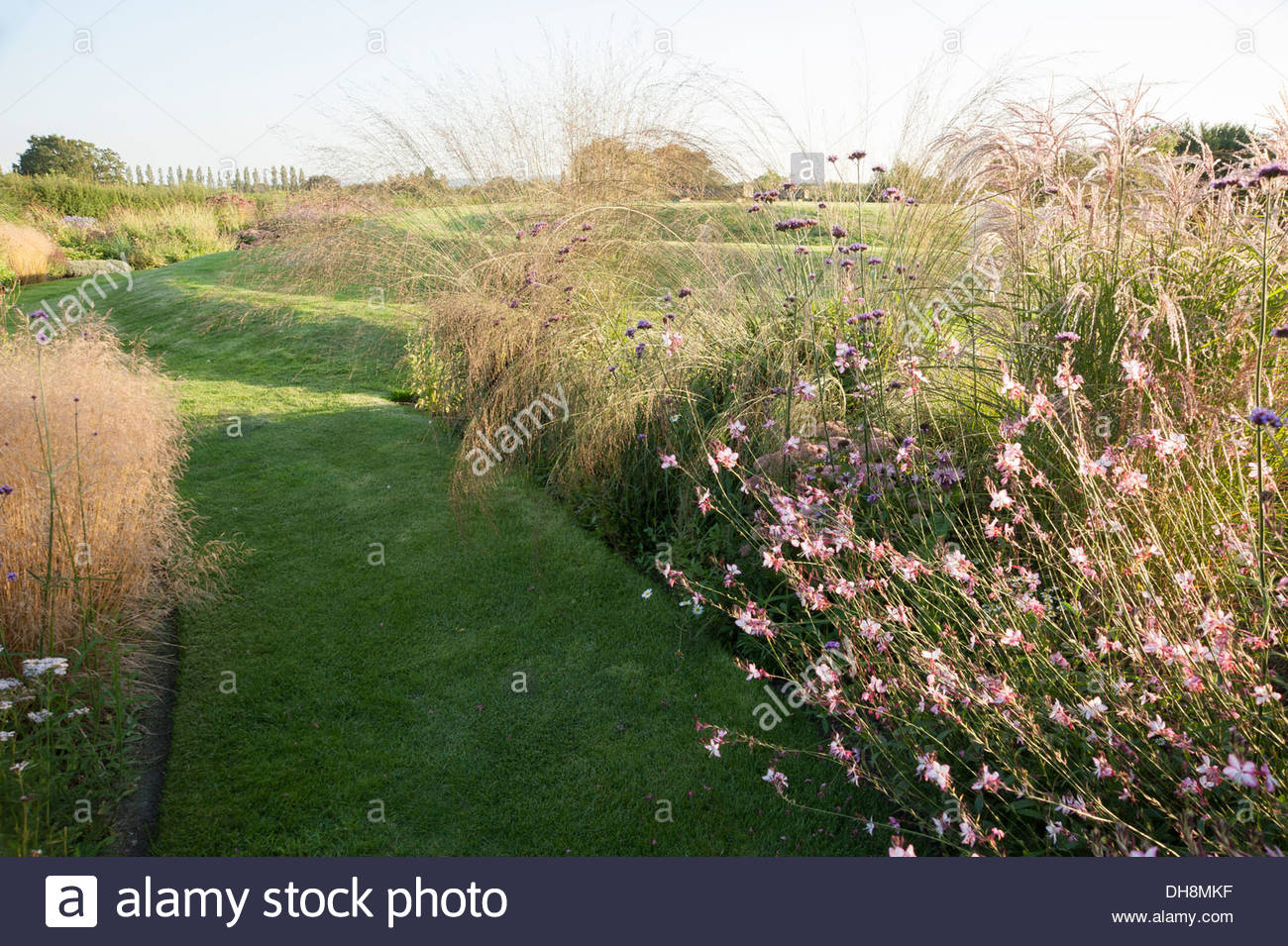 Grass path between autumn borders with gaura and grasses for Mounding grass