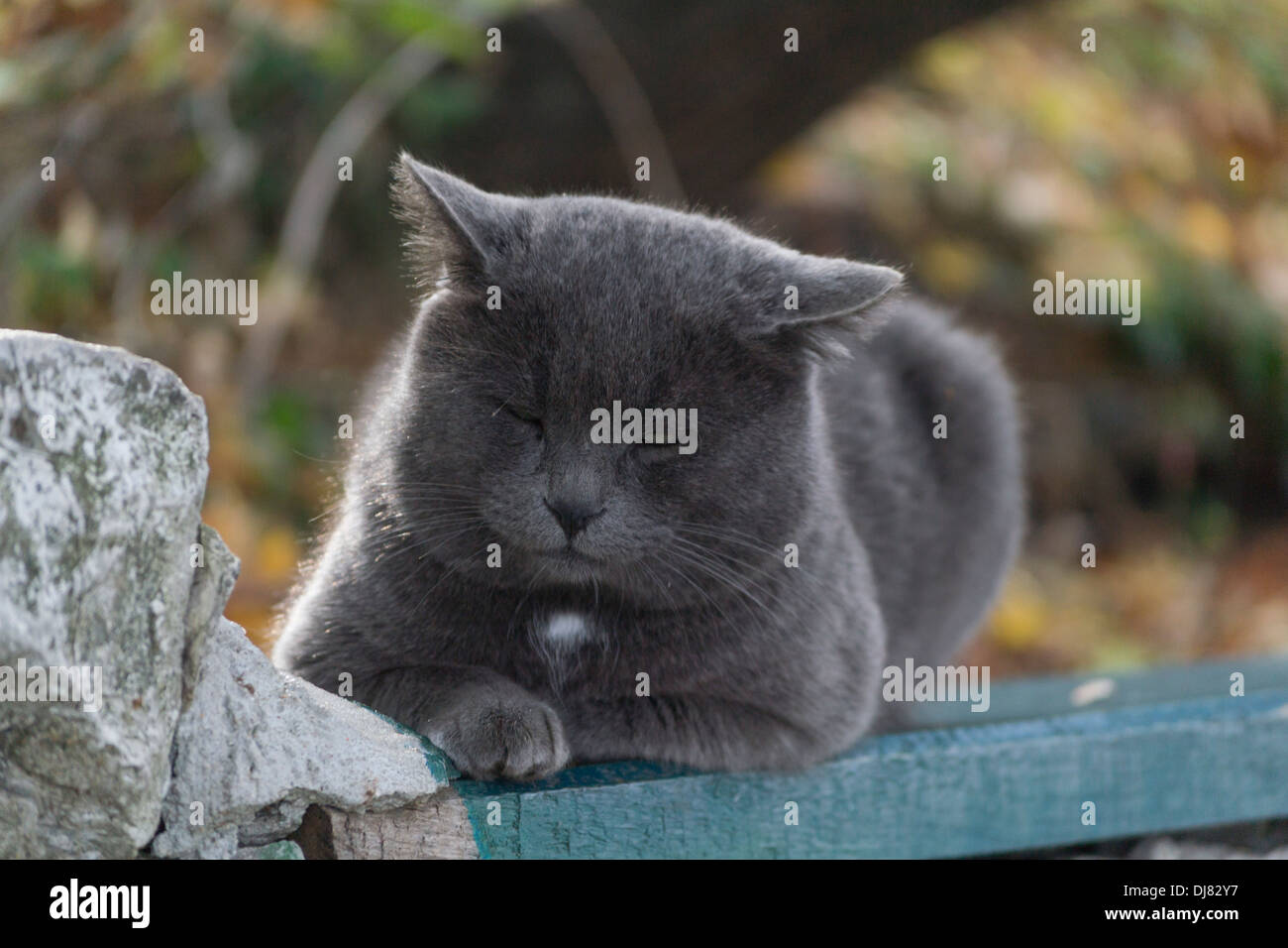 russian-blue-cat-lying-on-a-bench-in-a-p