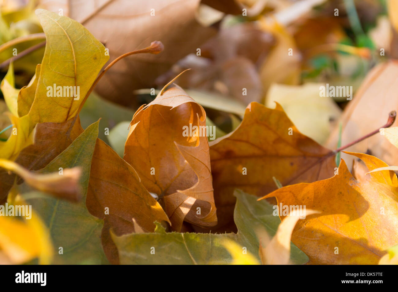 autumn-leaves-lying-on-the-ground-in-the