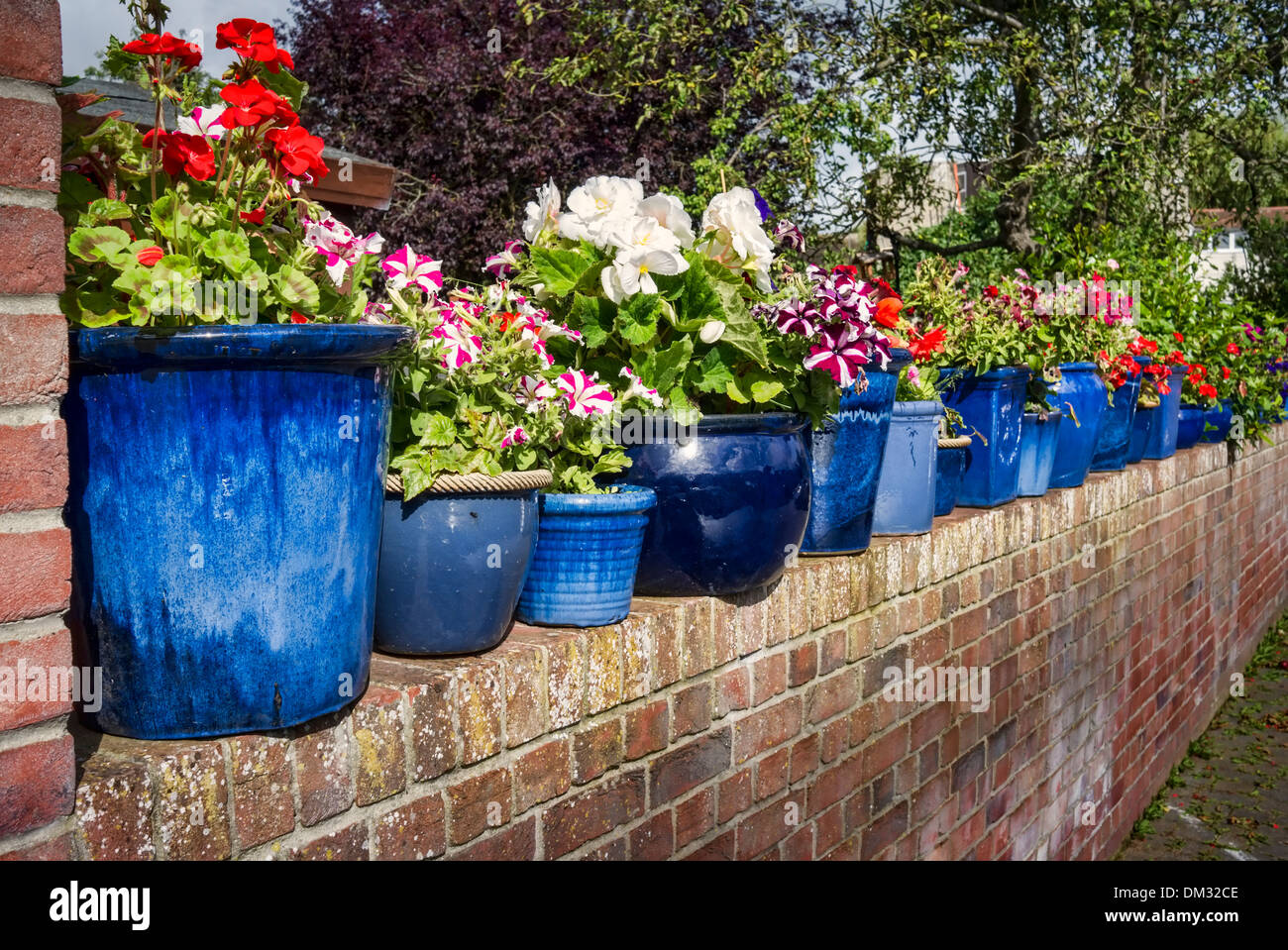 Small Car Planters : Line of blue planters in small courtyard garden uk