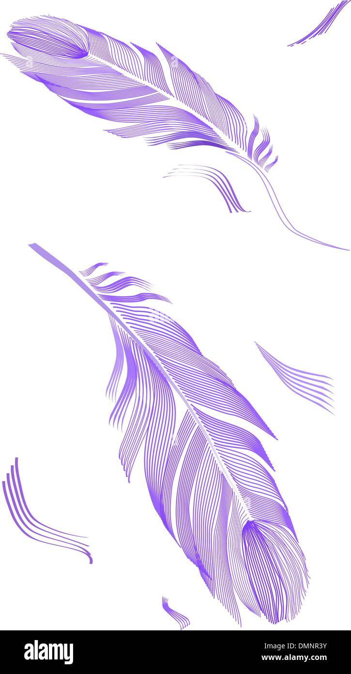drawing bird feather Stock-Vektorgrafik