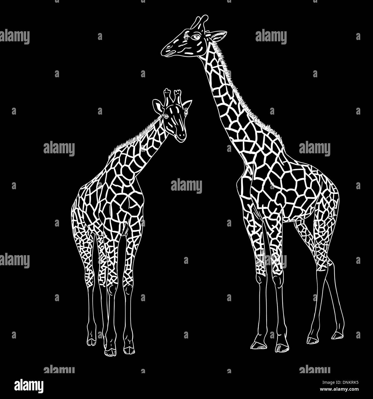 Two giraffes. Vector illustration. Stock Vector