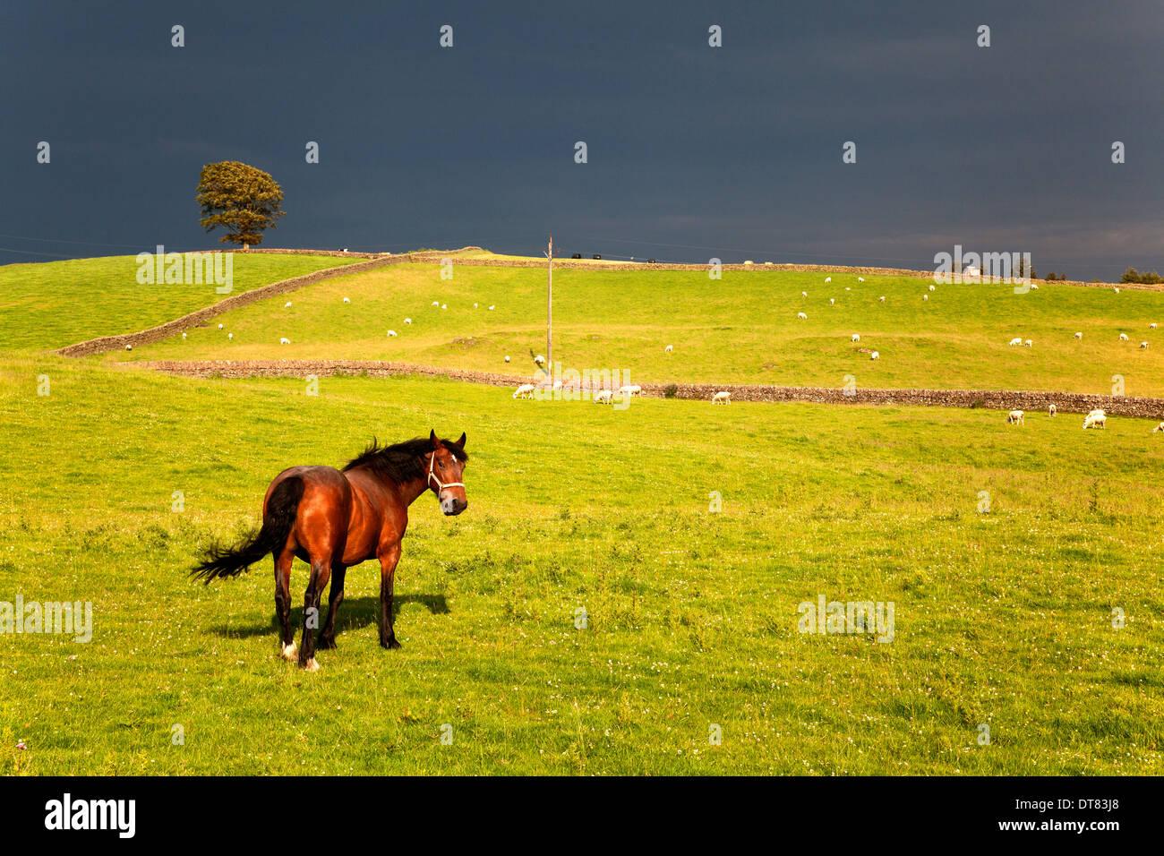 horse-in-sunlit-field-with-stormy-sky-behind-crocketford-dumfries-DT83J8.jpg
