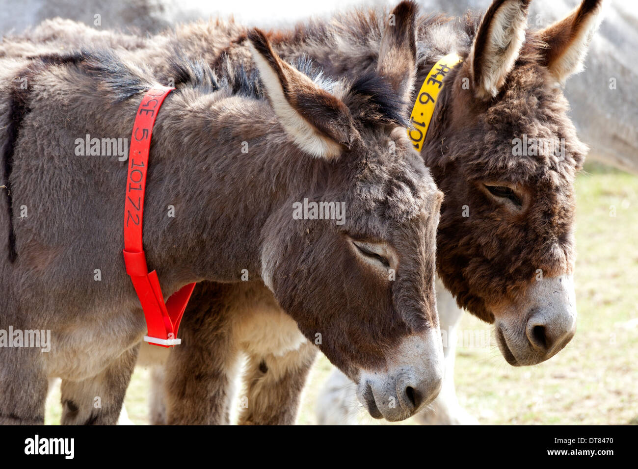 the-donkey-sanctuary-near-sidmouth-devon-DT8470.jpg