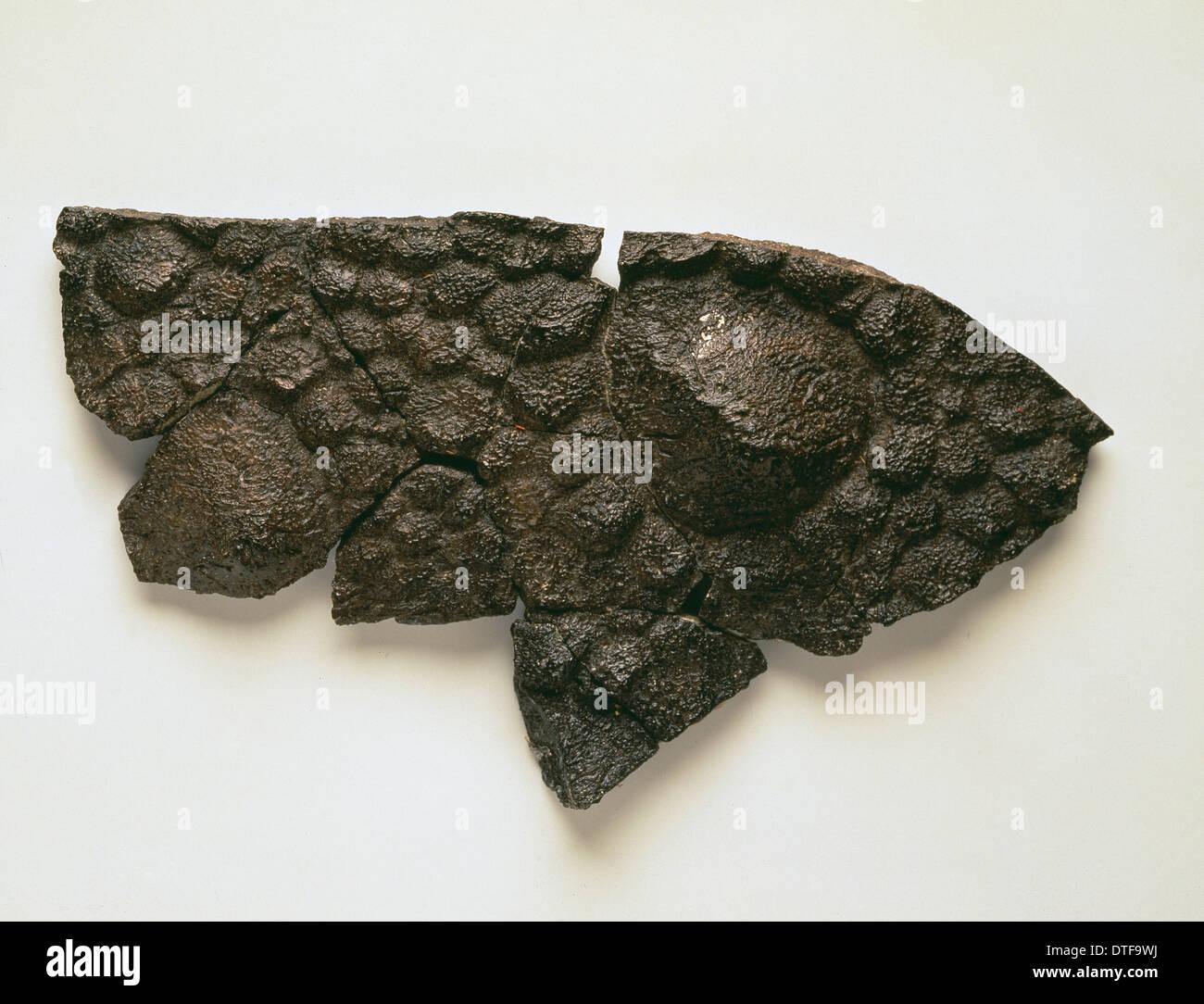 Polacanthus skin impression Stock Photo