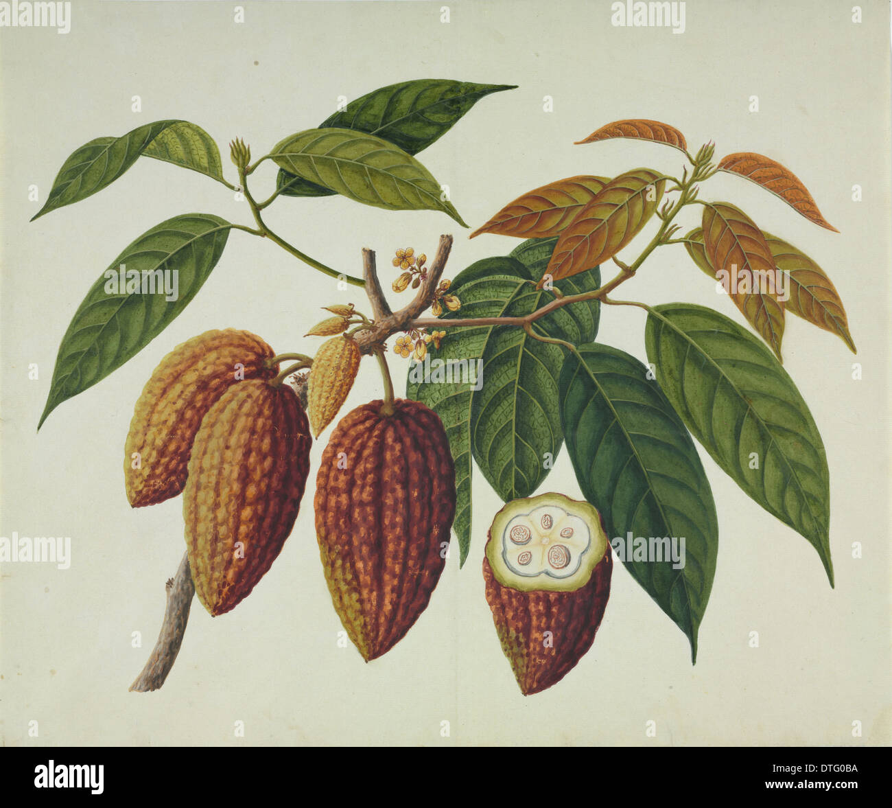 Cocoa Natural History Museum