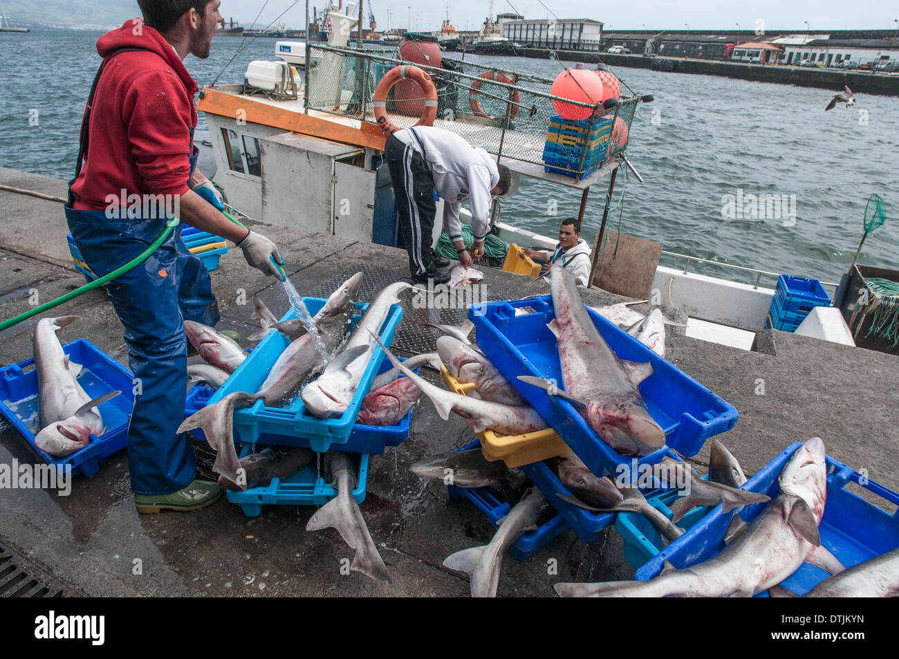 Tope sharks off loaded from deep water long line fishing for Long line fishing