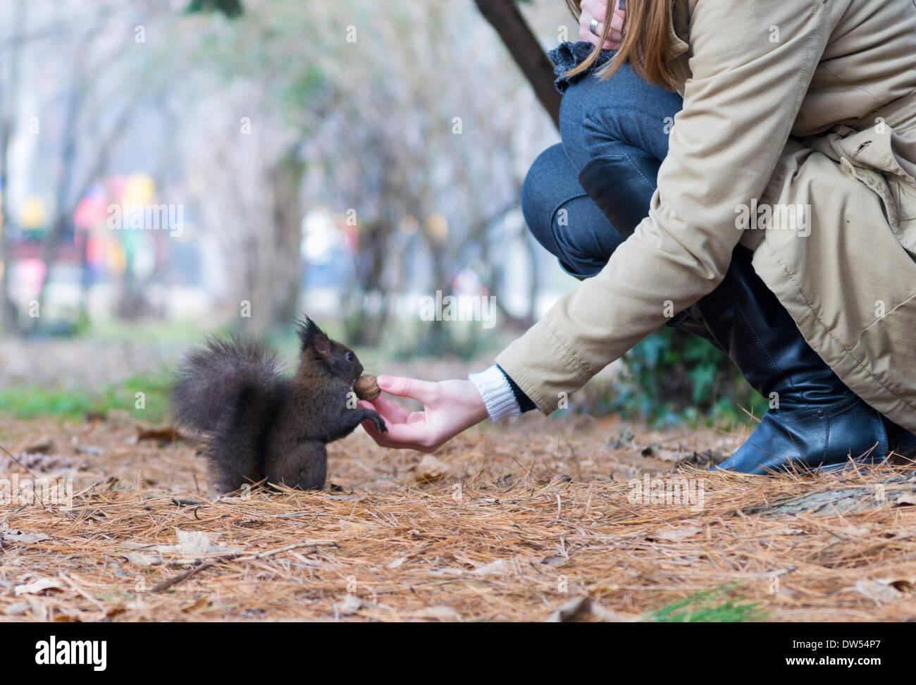 red-squirrel-sciurus-vulgaris-romania-DW