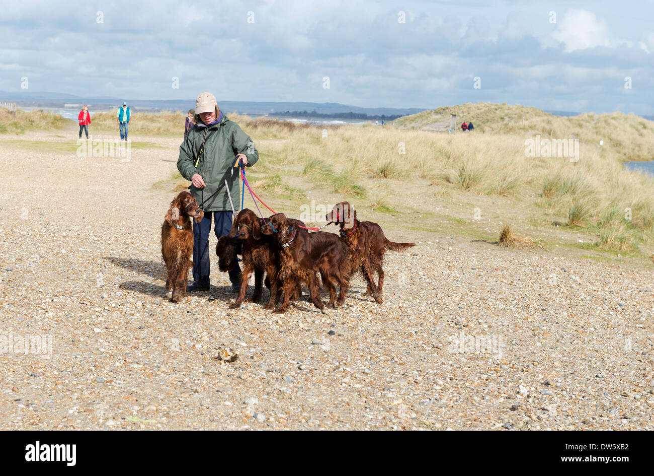 Free Dogs West Sussex