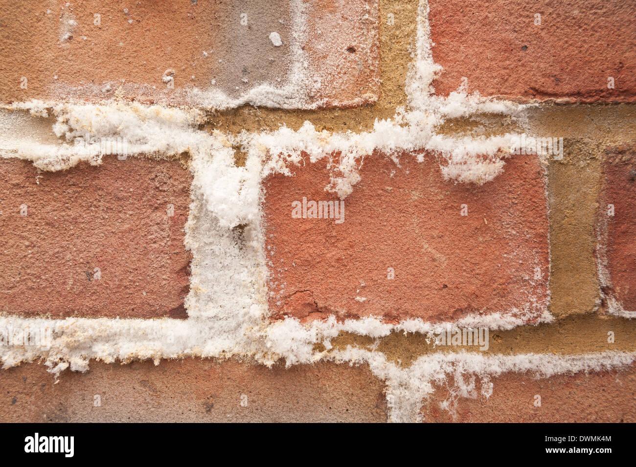 Efflorescence A Powdery White Salty Deposit Of Salts That