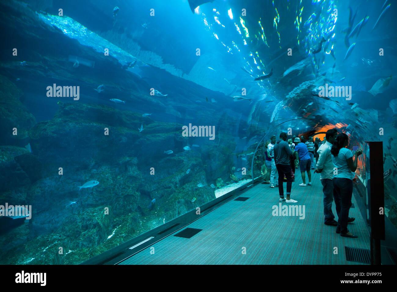 dubai aquarium tunnel at dubai mall in dubai business bay uae stock photo royalty free image. Black Bedroom Furniture Sets. Home Design Ideas