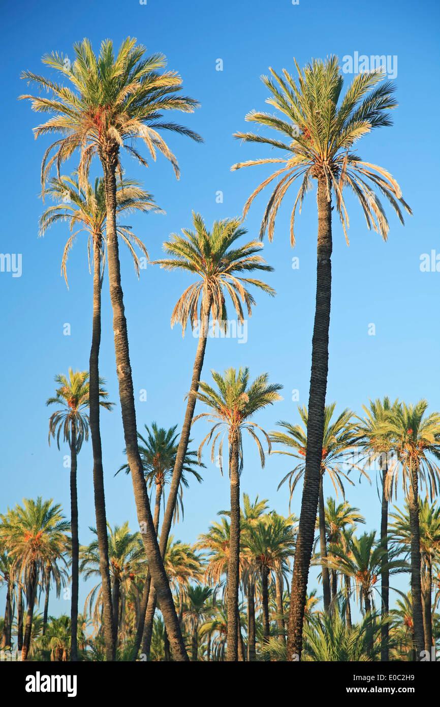 Baja california sur dating sites