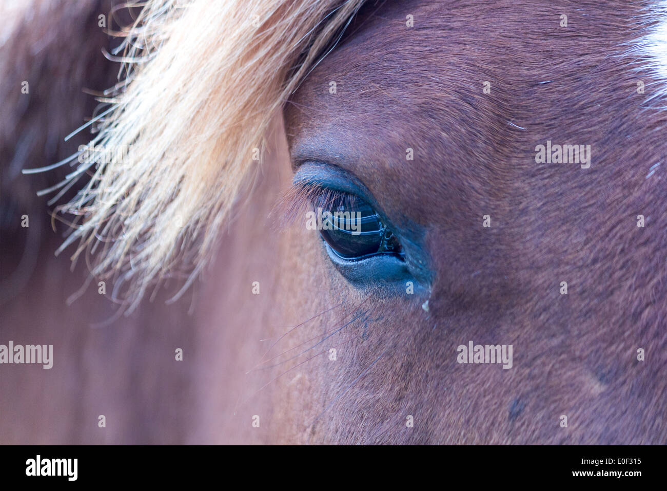 horses-eye-where-you-can-see-the-reflect