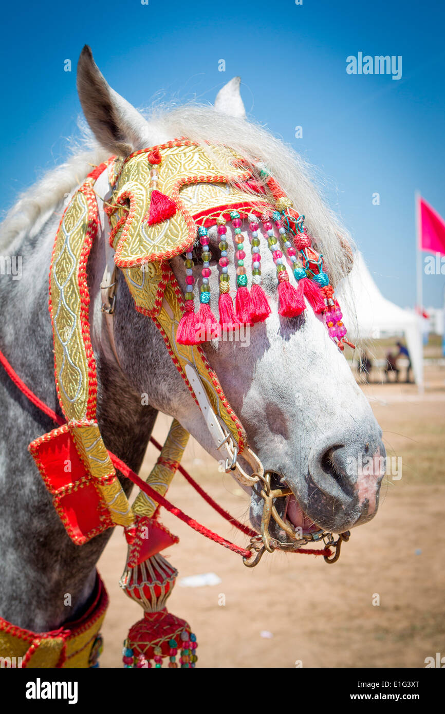Detail of traditionally decorated Arabian Barb horses performing at a fantasia near Rabat in Morocco. Stock Foto