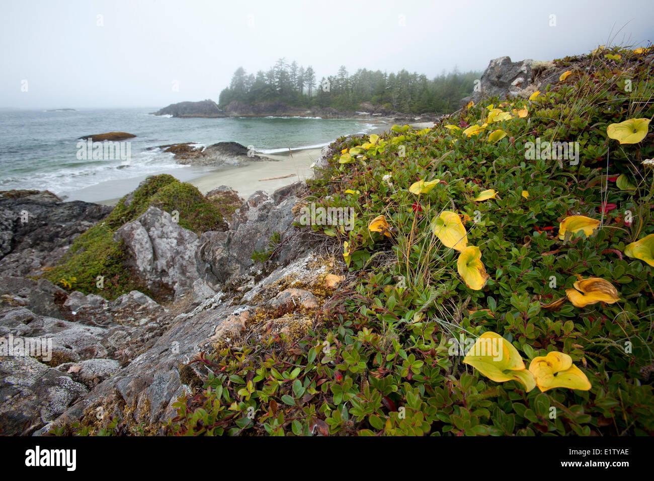 Radar Beach Vancouver Island