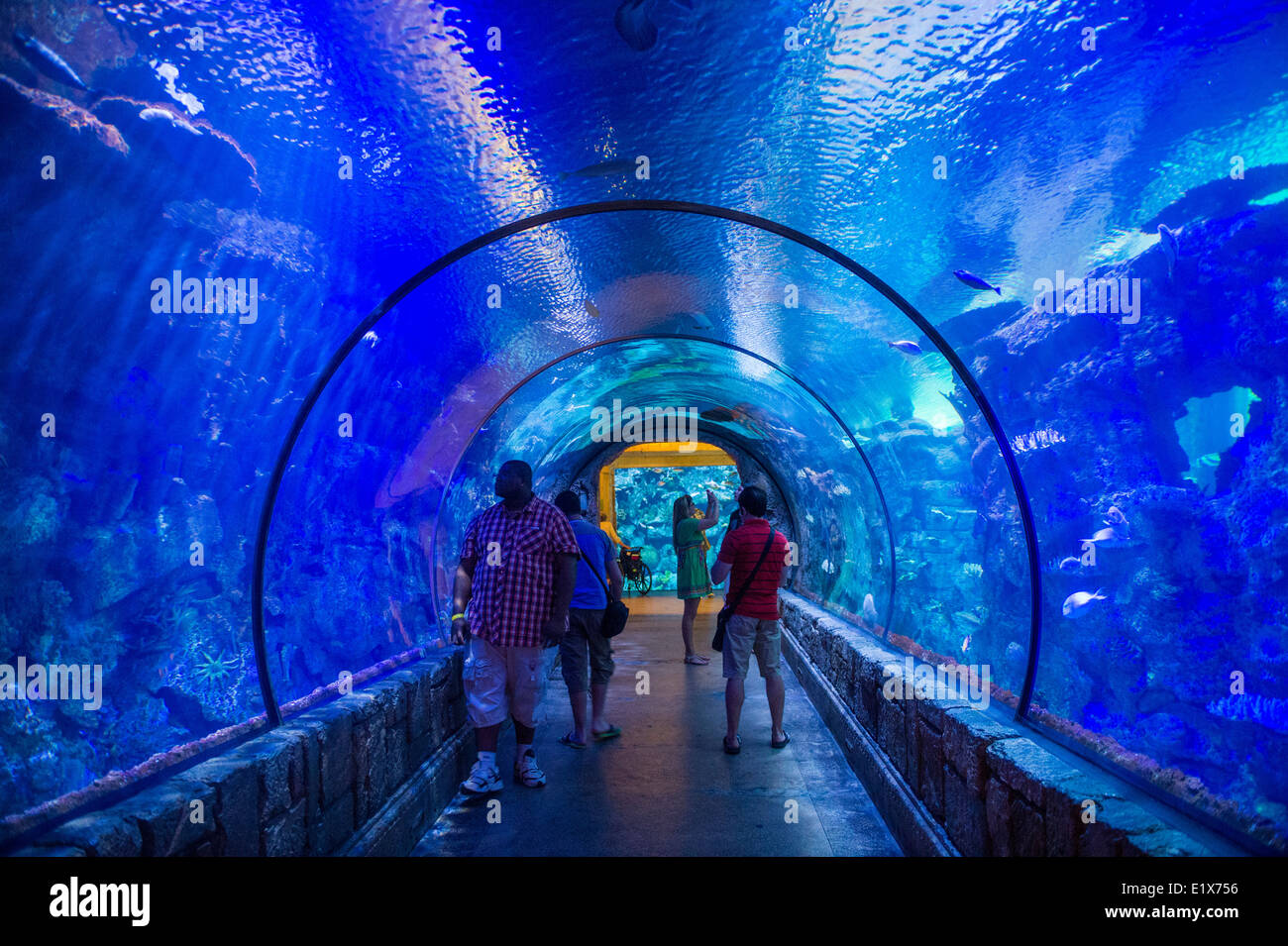 The shark reef aquarium at mandalay bay hotel and casino for Fish tank las vegas