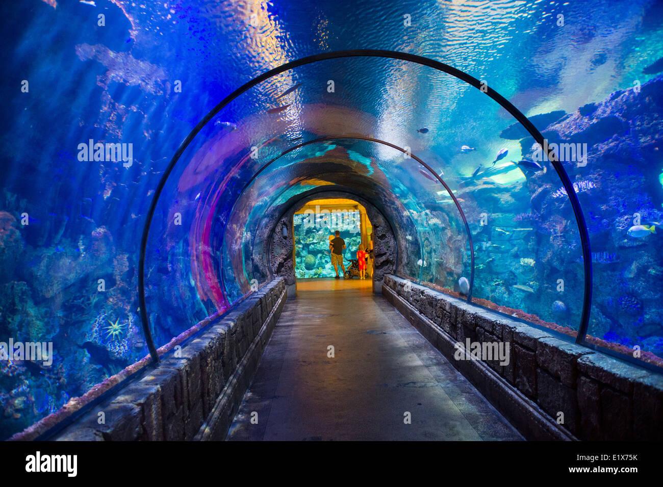 The Shark Reef Aquarium at Mandalay Bay hotel and casino ...
