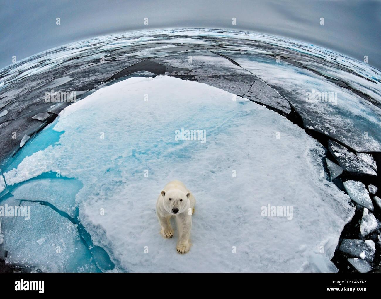polar-bear-ursus-maritimus-portrait-in-s