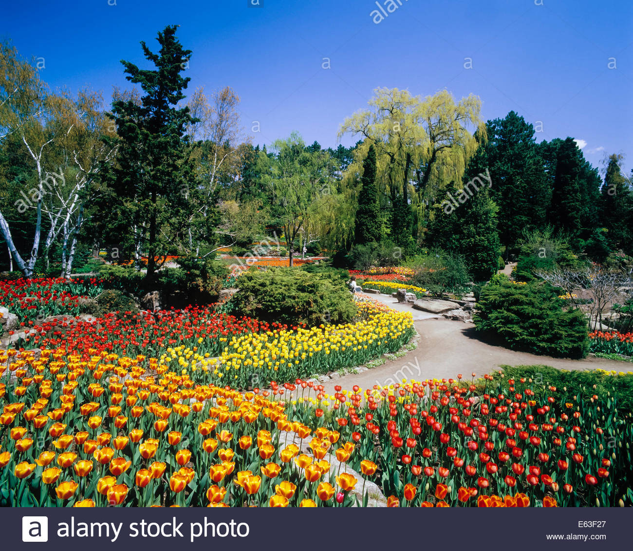 Tulips in the rock gardens of the royal botanical gardens for Landscaping rocks canada