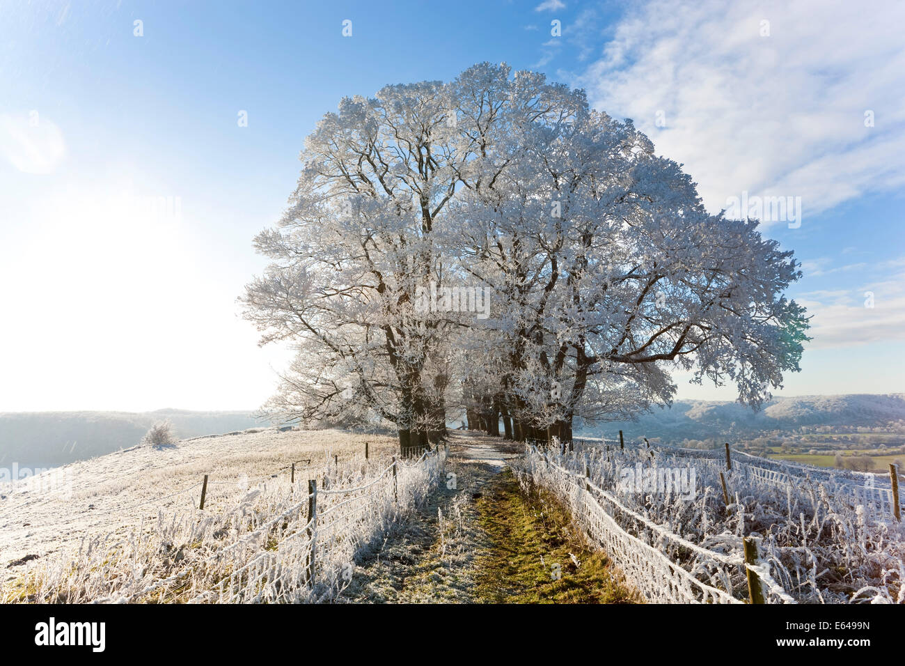 snow-covered-tree-on-downham-hill-uley-g