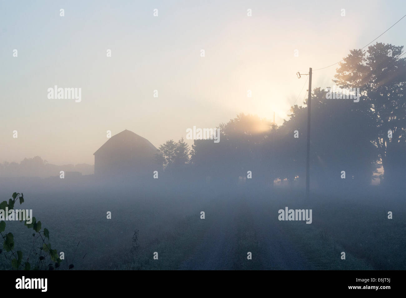 sun fog sunrise trees - photo #32