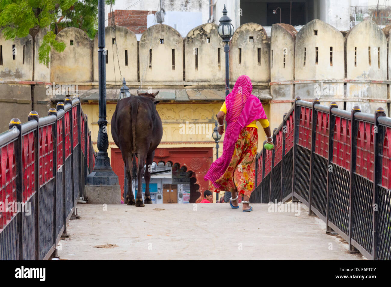 woman-in-sari-and-cow-walk-together-over-a-bridge-in-udaipur-rajastan-E6PTCY.jpg