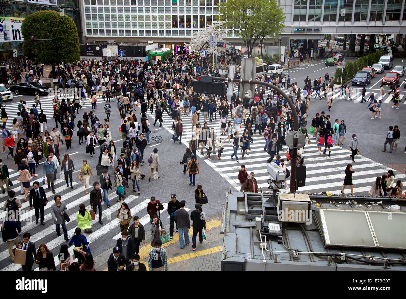 Is Shibuya Crossing The Busiest In The World