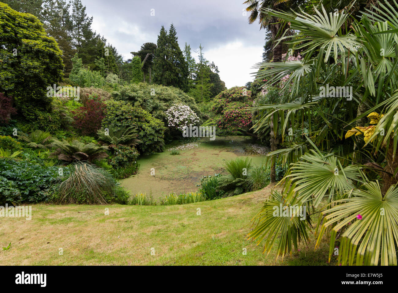 view-of-the-entrance-to-the-jungle-at-heligan-near-mevagissey-cornwall-E7W5J5.jpg