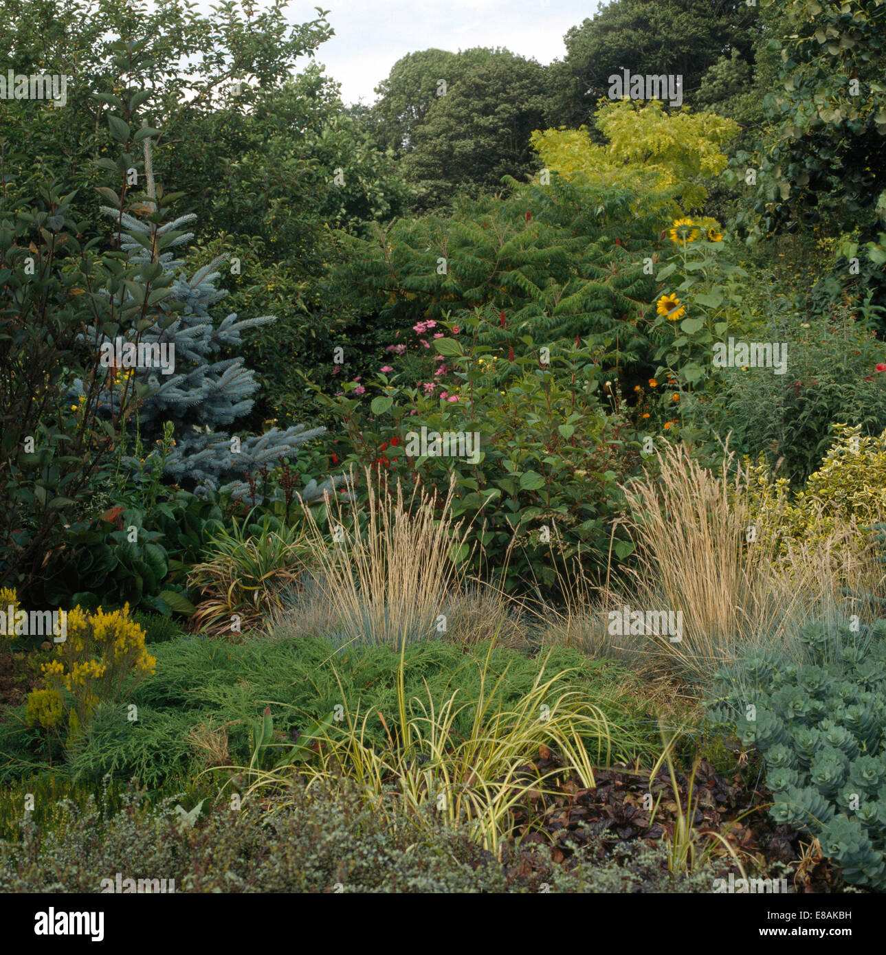 Grasses and small conifers in border in large country for Large grasses for gardens