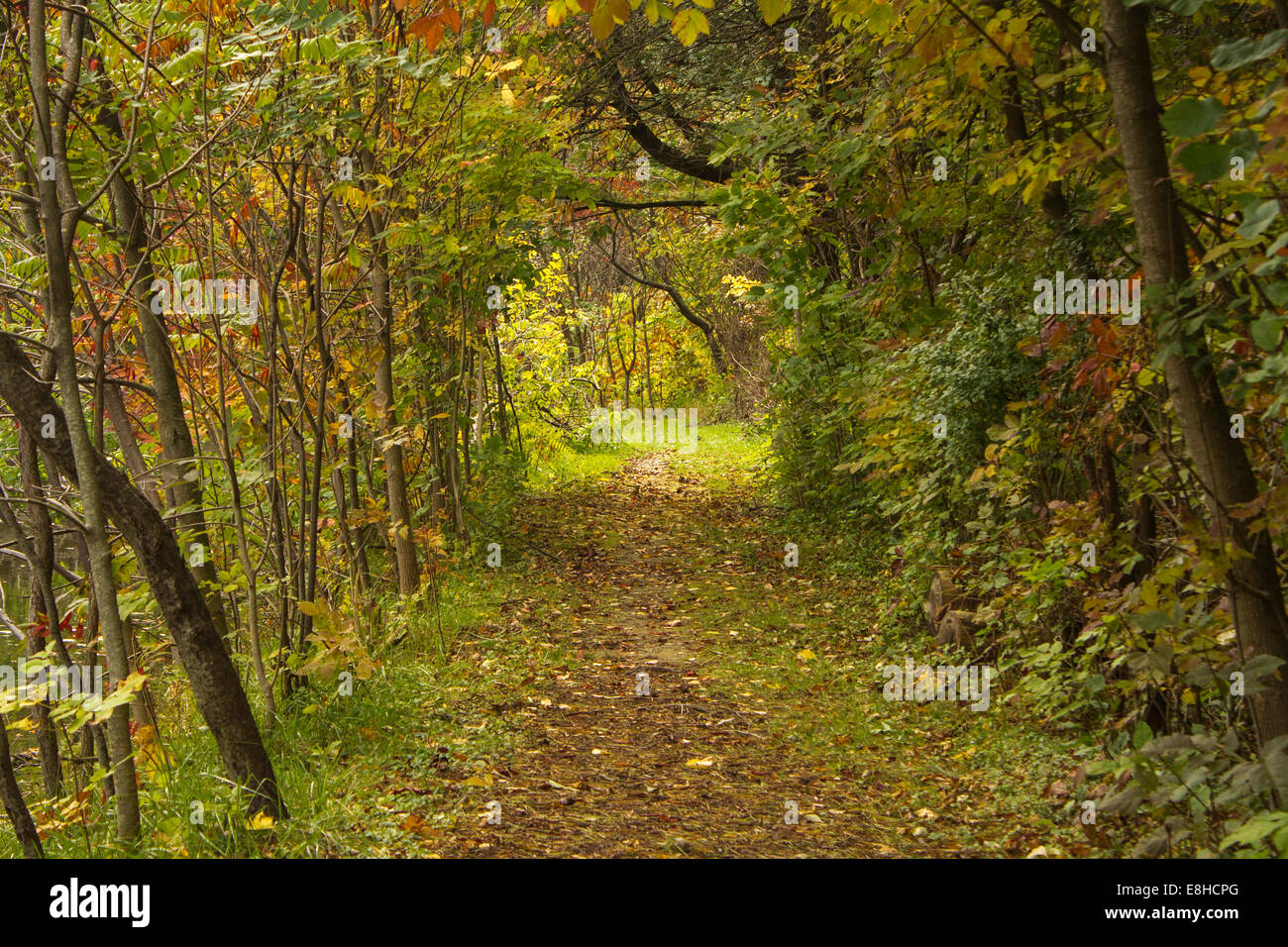 path-covered-in-autumn-leaves-along-the-