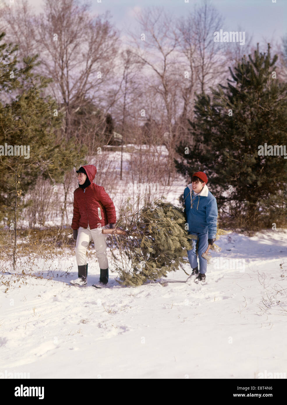 1960s TWO BOYS CARRYING EVERGREEN CHRISTMAS TREE THROUGH SNOW Stock Photo