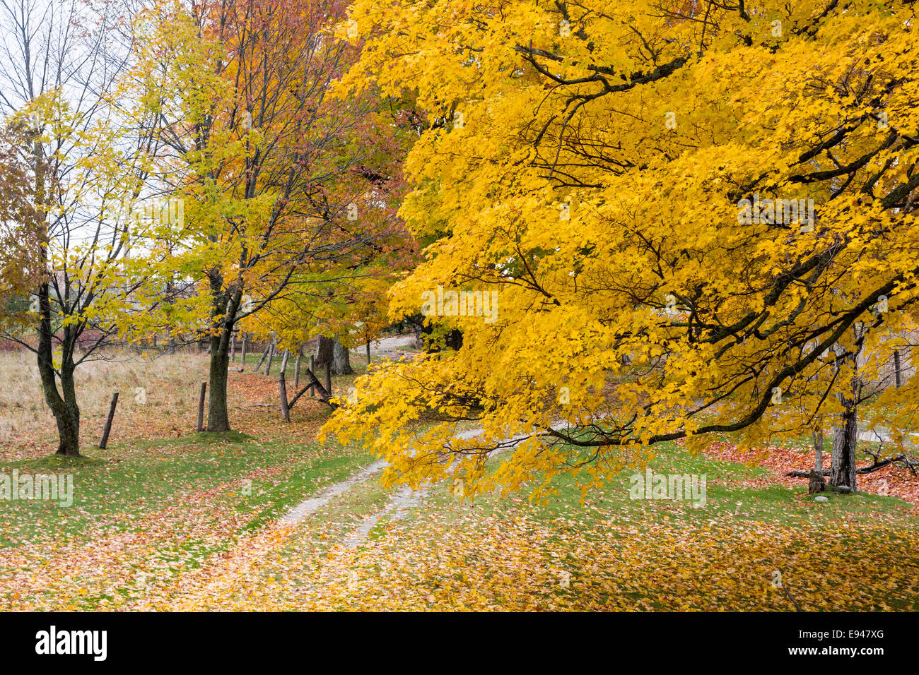 farm-driveway-with-colourful-maple-trees