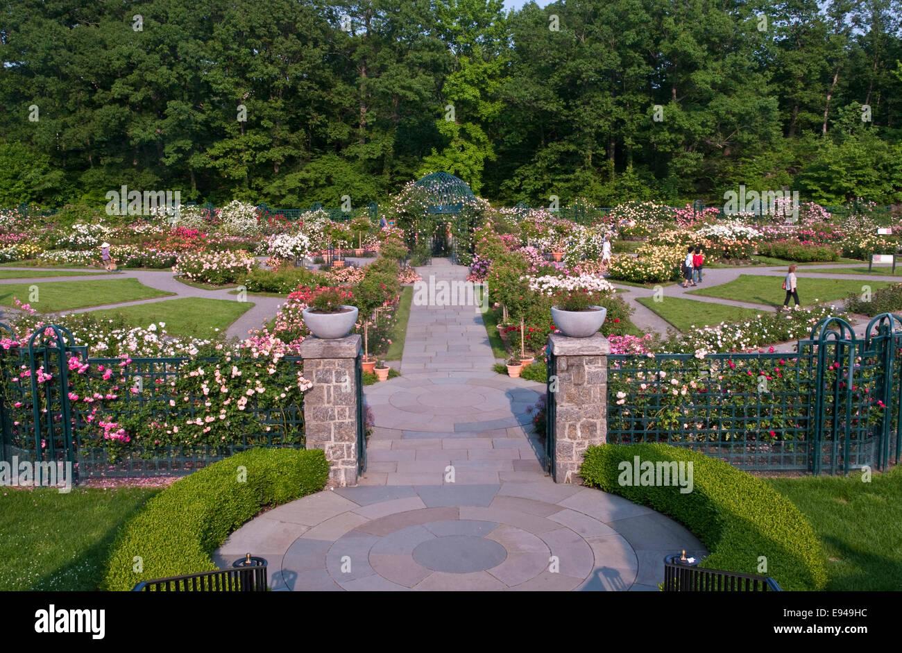 Peggy Rockefeller Rose Garden At The New York Botanical Garden Stock Photo Royalty Free Image