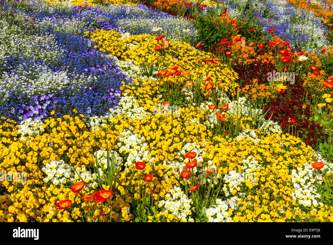 Flower bed top view in different colours stock photo for Best flowers for flower bed