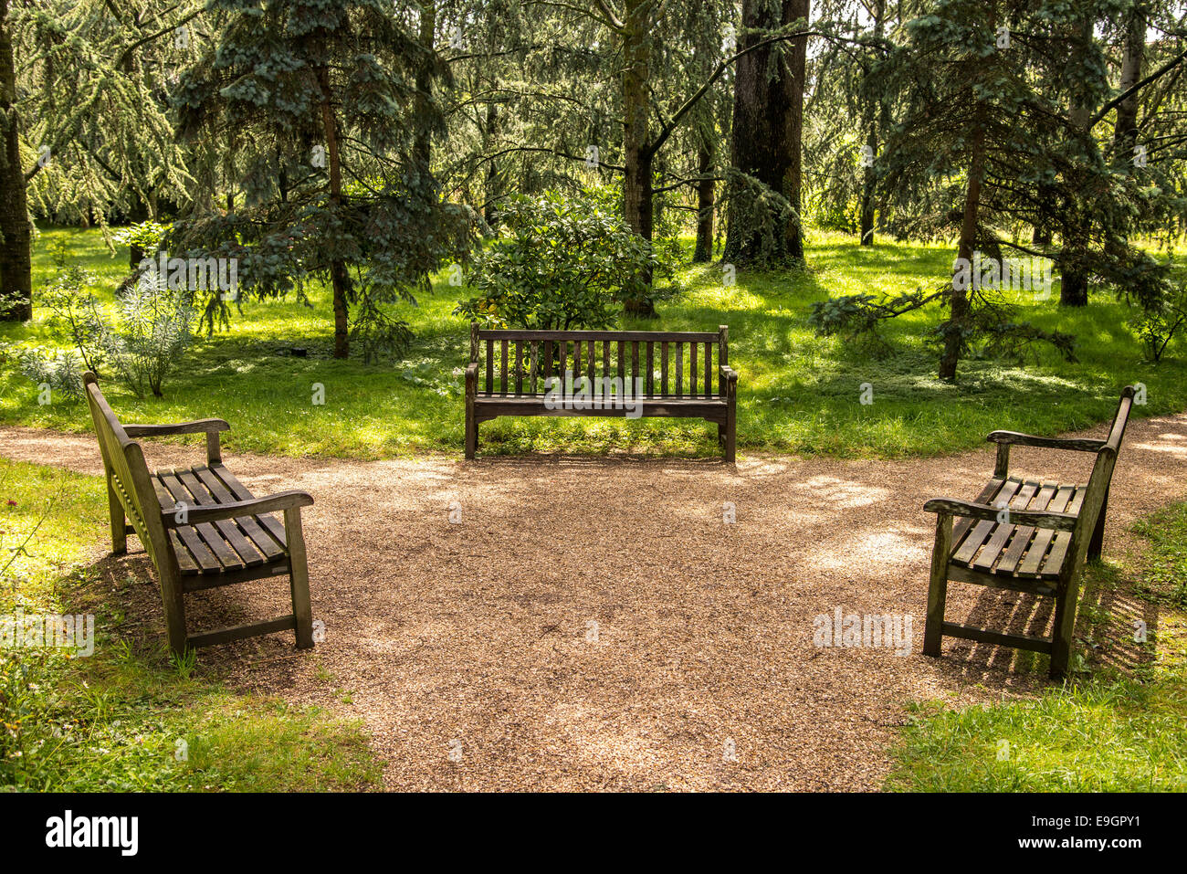 Three Benches On Converging Paths In A Forest Stock Photo